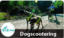 Dogscootern